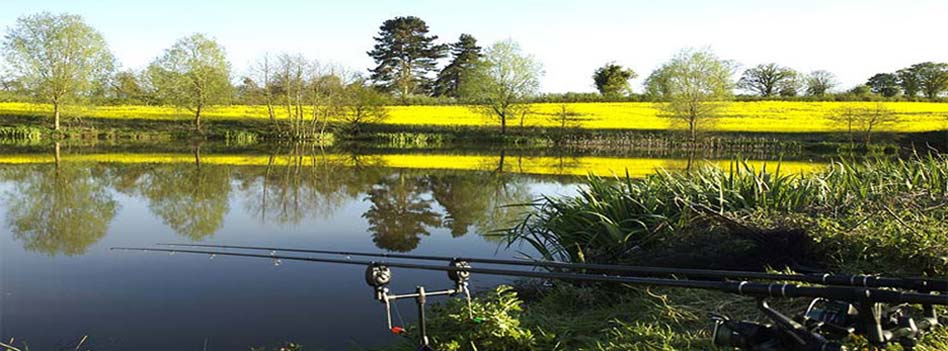Evesbatch Old Lake Carp Fishing Herefordshire And